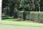 Ainslie ACT Wire fencing 15